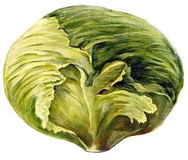 Veggie Hand Painted Art Patterns