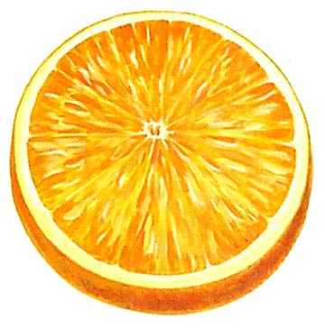 Orange Fruit Art Pictures