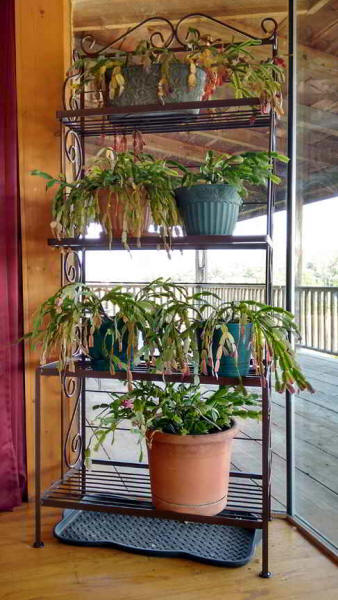 Large wrought iron plant rack